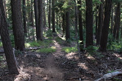 Trail through the trees (rozoneill) Tags: maiden peak trail waldo lake pacific crest oregon hiking willamette pass gold skyline odell butte volcano forest eugene