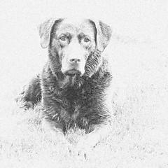 Kayla (Geziena) Tags: hond dog huisdier bewerkt nik olympus xz1 zw