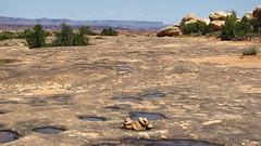 Cairn Markers (Anomieus) Tags: canyonlands desert utah nature landscape rock sky potholepointtrail outdoor cairn neverstopexploring flickrtravelaward canyon rockformation geology