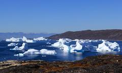Ice is Beautiful in Qeqertaq (twiga269  FEMEN #JeSuisCharlie) Tags: twiga269 om  whatareyoutrainingfor gettingstrongereveryday wanderlust wilderness mountainwilderness mw gngl grandnordgrandlarge gro023 iceisbeautiful greenland kalaallit nunaat kalaallitnunaat disko bay baiededisko diskobugten iceberg ilulissat qeqertaq saqqaq groenland grnland groenlandia grnland grenlandia   kayak ice hielo glace glacier immense gletscher ericchazal arctic diskoline inlandsis torssukatak kangilerngata kangilerngatasermia eqi eqip sermia smallesund