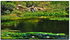"""Upper Pond """"Quarry Hill"""" (fotomark.net) Tags: pond waterfall color lilypads waterlilies sonomacounty quarryhill"""