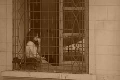 Just liked this scene (ignaciovidelahidalgo) Tags: asuncion paraguay dog sepia nikond3300 d3300 nikon