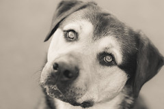 Please...-1 (d3max) Tags: martinhillphotography mansbestfriend animals animalrescue canine dogs 5dmk3 canon cambridgeshire volunteering