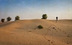 Dubai desert in color (Tigra K) Tags: dubai unitedarabemirates ae 2013 color landscape nature plant tree