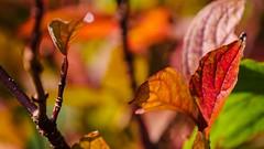 Autumn 1 -colors (Yasmine Hens) Tags: hensyasmine namur belgium wallonie europa aaa belgi belgia europe belgien  belgique blgica   belgie  belgio    bel be