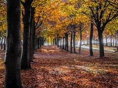 Nostalgic Light (Shotslot) Tags: autumn trees sunlight leaves landscape avenue flowersplants swynnerton