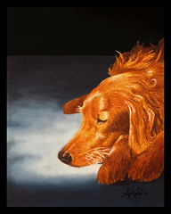 Irish Setter Soaking up the Sun (Galactic Dreams) Tags: morning blue sleeping red irish orange dog sunlight macro cute art wet water colors sunrise watercolor painting puppy fur morninglight artwork friend long paint nap sleep cinnamon young longhair dry best mans filter watercolour rug medium rays meditation pup reddog pooch relaxation relaxed companion irishsetter smells setter womans dogsleeping originalwork artowrk morningrays sleepingpuppy sleepingpup sleepingirishsetter