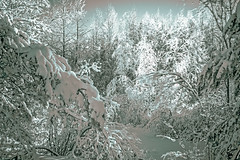Winter fairy tale (Apitel) Tags: winter snow tree nature forest season landscape ir frozen woods scenery long exposure frost russia scope snowy magic seasonal january infrared fir mystical nordic paysage magical mystic hoya r72 spellbinding hibernal nex7