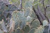 """Cactus • <a style=""""font-size:0.8em;"""" href=""""http://www.flickr.com/photos/77680067@N06/8433969042/"""" target=""""_blank"""">View on Flickr</a>"""