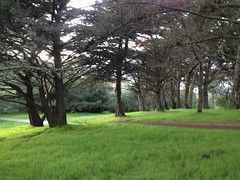 Golden Gate Park West (Nkipper) Tags: lab3 location2 2013 bio482