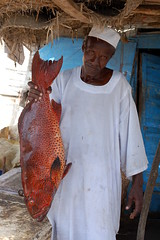 Catch of the Day - Sudan (UNEP Disasters & Conflicts) Tags: africa sudan training environment climatechange drought desert conflict disaster peace development water unep unenvironment
