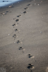 footprint (sn0pan) Tags: beach japan iso100 dof bokeh enoshima f4 footprint 200mm 1250sec canonef70200mmf28lisiiusm canoneos1dx