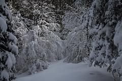 IMG_6127 (Antonio Ferraroni) Tags: wood winter boy mountain snow mountains alberi montagne canon woods walk neve peaks 1785mm inverno montagna montains bosco foresta cansiglio 50d camminate escusione