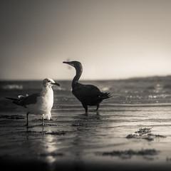 Miami (30 of 123) (The Paul Miller) Tags: ocean city sea summer sun seagulls beach water birds coast mar fly sand waves florida miami south tide flight salt playa atlantic avian