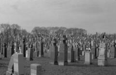 115 (Brad Maestas) Tags: new york nyc ny film cemetery brooklyn 50mm nikon f14 f 400 handheld plus epson hp5 1970 ilford cavalry preai ftn v500 photomic nikkorsc ilfosol3