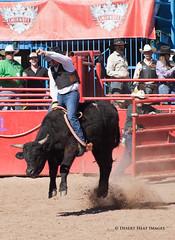 IMG_2168 (DesertHeatImages) Tags: arizona men phoenix cowboys women boots wrestling hats lgbt rodeo poles steer cowgirls bullriding regional roadrunner 2013