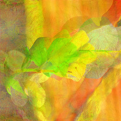 New Growth (hollykl) Tags: abstract leaves photomanipulation square spring digitalart hypothetical newgrowth vividimagination wardpark artdigital sharingart awardtree vanagram crazygeniuses exoticimage