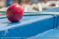 Ameixa e barcos - Florianopolis (Daniel Guilhamet) Tags: costumes cidade nikon barcos natureza florianpolis florianopolis santacatarina alimentao flickrestrellas