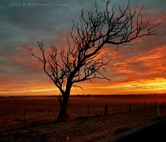 Red dust at sunrise (PhotoArt Images) Tags: summer sunrise australia deadtree dust southaustralia silohette strathalbyn nikon2470mm28 photoartimages silohetteoftree