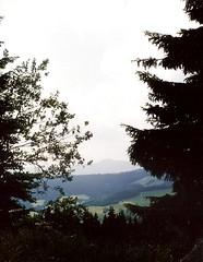 028_Verecke_1992 (emzepe) Tags: mountain tree pine scenery ukraine 1992 hegy kirnduls ukraina tj  nyr oblast hegyek  ukrayina szp jlius ukrajna verecke krptalja  regiunea zakarpatska zakarpattia hegyvidk  hg vereckeihg  subcarpatia  szervezett krptaljai  fen