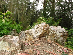 Rock on the Summit (ryanmichaelsf) Tags: china california wood city flowers blue trees orange brown mist green art abandoned nature water coffee japan fog closeup digital forest canon cherry photography oakland berkeley photo moss drops san francisco rocks bell stones details blossoms perspective drinking ivy growth inspirational canopy knots mossy milpitas inspiring dandelions sx160is
