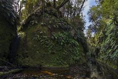 Waggon Creek (Pete Prue) Tags: bush placeswestcoast waggoncreek stream creek water moss mossy ferns green brook forest native untouched wilderness backcountry ravine gorge cut peteprue peterprue