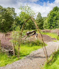 224 - au naturale (md93) Tags: thelodge aberfoyle forestry commission scotland woodland art sculpture treet trunk dead grass visitor centre 366