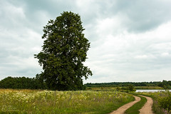 (klgfinn) Tags: cloud grass lake landscape road sky summer tree water