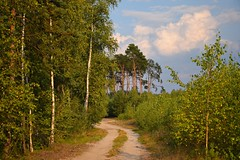 summer in the forest (JoannaRB2009) Tags: witeugi forest woods las trees landscape nature green path road countryside sky blue clouds birch pine dzkie lodzkie polska poland summer