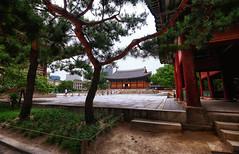 Deoksugung Palace View in Seoul, South Korea (` Toshio ') Tags: toshio deoksugung seoul southkorea korea palace asia gyeongungung deoksugungpalace deoksupalace history fujixe2 xe2 trees garden