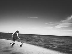 Beach Fun in Black & White (Reinholdt88) Tags: vscocam vsco ocean play playing sand strand sunny sun denmark summer olympusepl7 olympuspen epl7 pen olympus contrast blackwhite molly kingcharlescavalier dog fetch fun vall beach