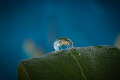 Precious Little World (dominidomk) Tags: tropfen drop world reflection macro refektion art blatt blau blue
