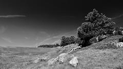 si peu de chose (glookoom) Tags: bw blanc blackandwhite black monochrome montagne massif lumire light landscape contraste chamrousse paysage pierre rhnealpes rocher grenoble gris france noiretblanc nature noir
