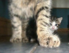 Mother's Love (bethanywalker1) Tags: cats cat kitten mother small protect love cute meow