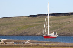 Caledonia at Herschel Island, Yukon. (Cameron Eckert) Tags: climagechange herschel arctic ocean sea maritime adventure northwestpassage sail sailing yacht boat ship wilderness ecosystem north northern yukonterritory beaufortsea arcticocean harbour expedition global