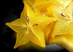 We are all Stars. (Through Serena's Lens) Tags: mm macro mondays stars starfruit fruit juicy yellow carambola still life closeup macromondays