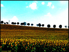 """""""Gers"""" (Corinne DEFER - DoubleCo) Tags: gers tournesols corinnedefer"""