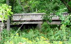 Bridge (cordeliasmom2012) Tags: bridge transition summer road