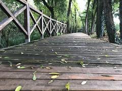 Prime foglie d'autunno (fabbiot75) Tags: alberi natura foglie autunno legno passerella