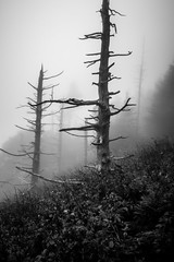 scenes along appalachian trail in great smoky mountains (AgFineArtPhotography.com) Tags: trail appalachian mountains sign park great woods tourism eastern outdoor hiking adventure america usa hike national summit trees fog smoky gray gloomy scary ecology summer outside tennessee clingmans old explore dome pinnacle historic elevation forest marker wilderness path nature vacation landscape guyot bunyoncharles vista