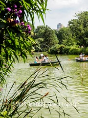 NYC Central Park 2014-8100387 (myobb (David Lopes)) Tags: calvertvaux centralpark em1 fredericklawolmsted manhattan nyc newyork newyorkcity omd olympus usa day green nature park summer