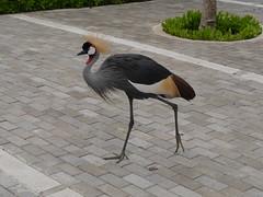 P2230202 (Gareth's Pix) Tags: aviarionacionaldecolombia baru colombia aviario bird