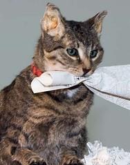 Liam Gillick, Cómo se va a comportar. Un gato de cocina habla, 2009. Detalle