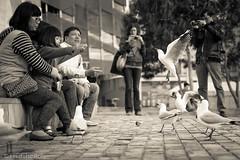 L'oiseau et l'enfant (Chambres Noires) Tags: vacances carlton melbourne victoria enfant oiseau australie chambresnoiresfr frdricrol