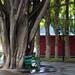 Banco bajo el árbol