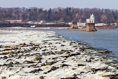 Chain of Rocks (Mike Matney Photography) Tags: bird birds canon river illinois midwest rocks eagle watertower january rapids mississippiriver eagles chainofrocksbridge 2013 intaketower eos7d