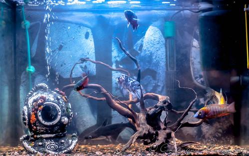 My Aquarium Year 2