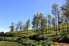 Landscape on the way to Ooty