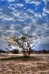 Still standing (SAUD ALRSHIAD 2  ) Tags: trees light sunset shadow sky sun tree sahara nature lines stone landscape nikon exposure shot tag explorer ngc saudi arabia sands riyadh hdr landscap ksa saud saudia riydh     arabin  nikonflickraward nikond7000 alrshiad