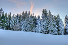 Winter forest (Daniel J. Mueller) Tags: schnee trees winter snow clouds forest fence schweiz switzerland zaun wald bume hdr sattelegg 7xp kantonschwyz cantonschwyz d800e